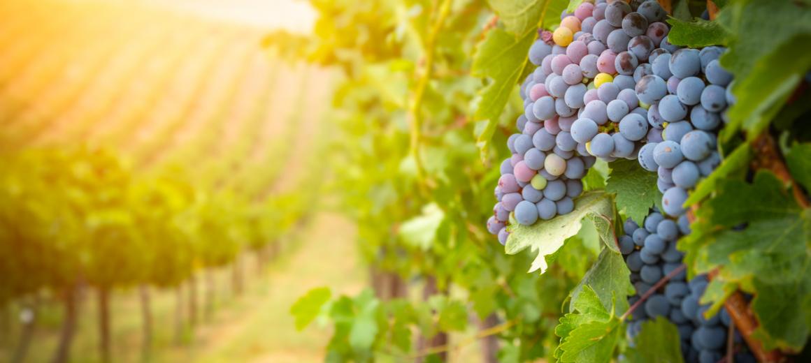 Wijn- en boomgaarden